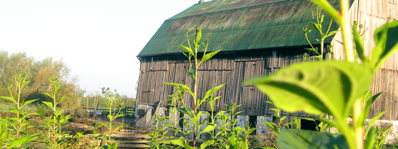 Barn and plants
