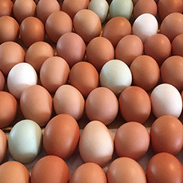 Rows of brown eggs
